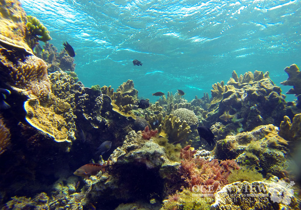 Snorkeling_3